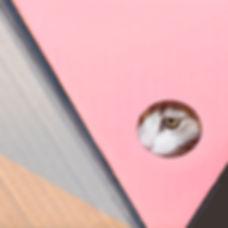 ojo 2.jpg