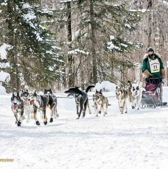 John Beargrease Race 2019