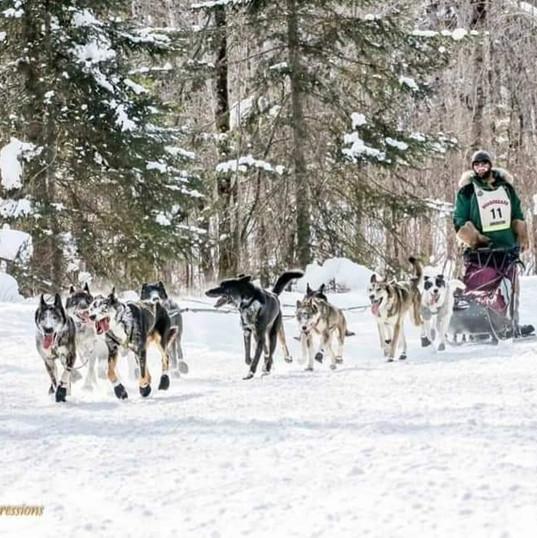 John Beargrease Race 2019