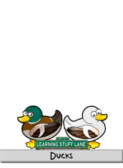 Character---Ducks