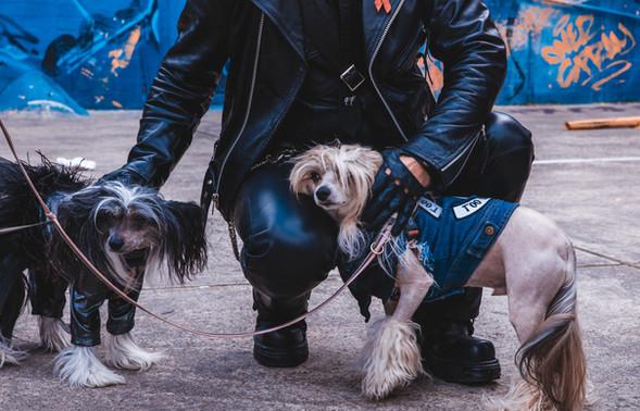 Wedding doggos
