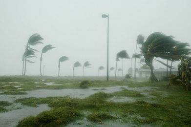 Wind gusts during hurricane blowing through palm trees.