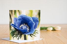 anemone de caen.jpg