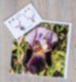 pink flowers and alcazar pack.jpg