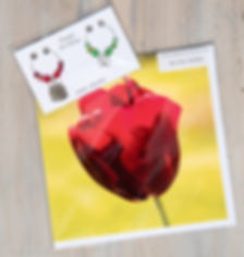 cake and tulip pack.jpg