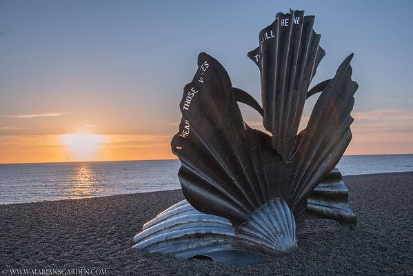 shell with sun.jpg