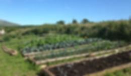 nodig market garden veg box