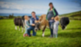 Henbant family jersey cow