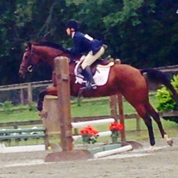 The mare is getting it! Better placings as the jumps got bigger. Go figure.jpg