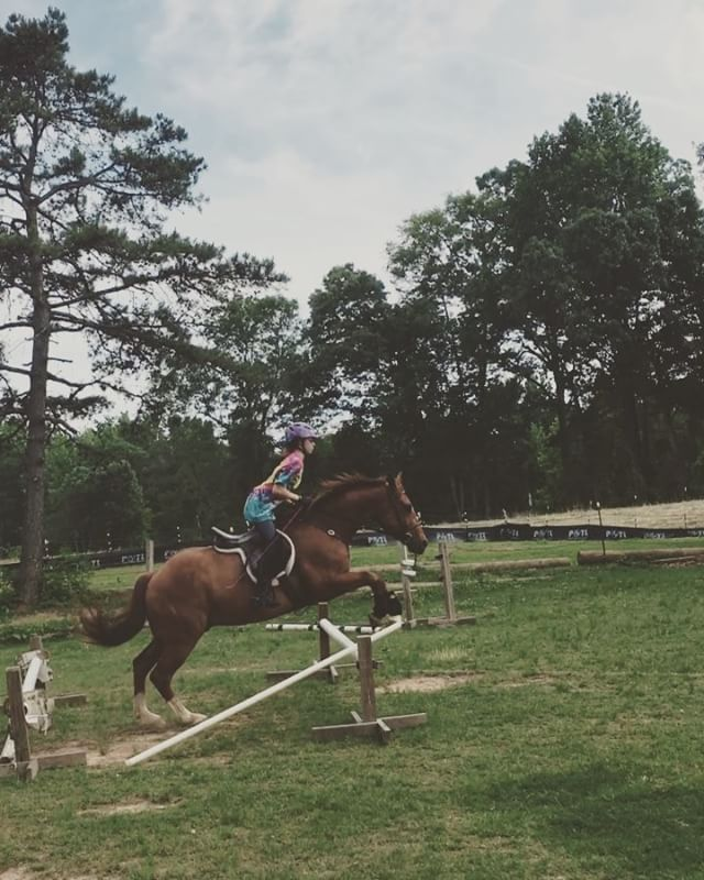 Katie's awesome grand finale bounces today! #kickon #eventing #eventinglife #teaching #futureeventer