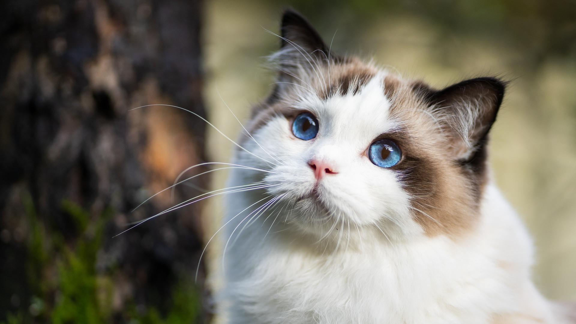 Woodgrove Animal Hospital Cat III.jpg
