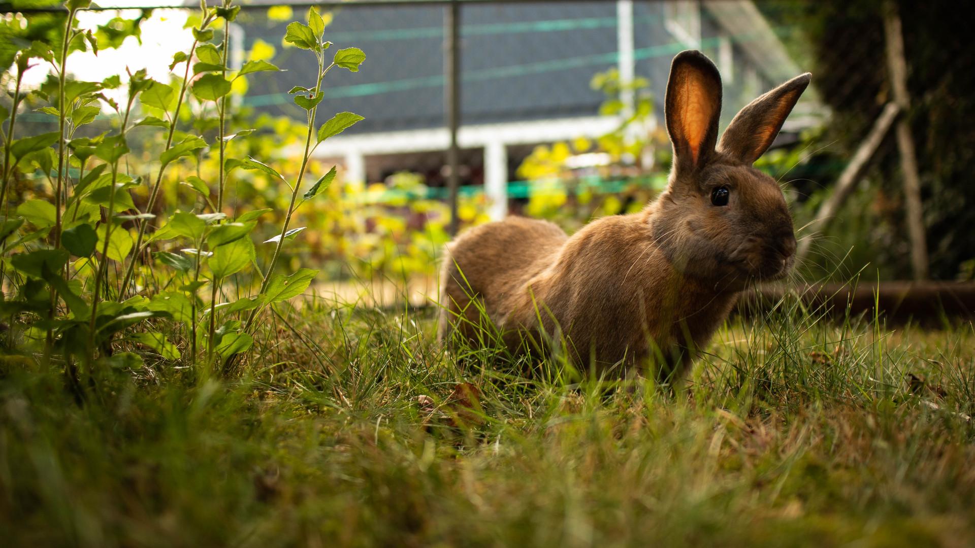 Woodgrove Animal Hospital Rabbit.jpg