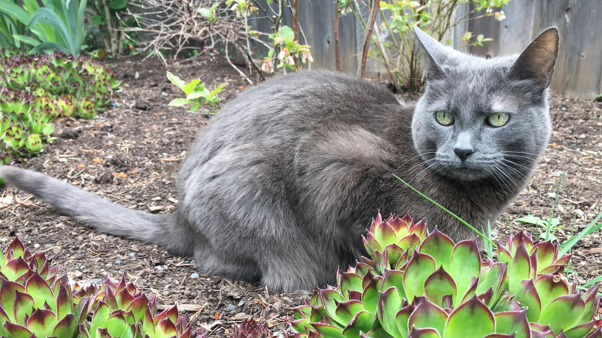 Woodgrove Animal Hospital Cat Domestic S
