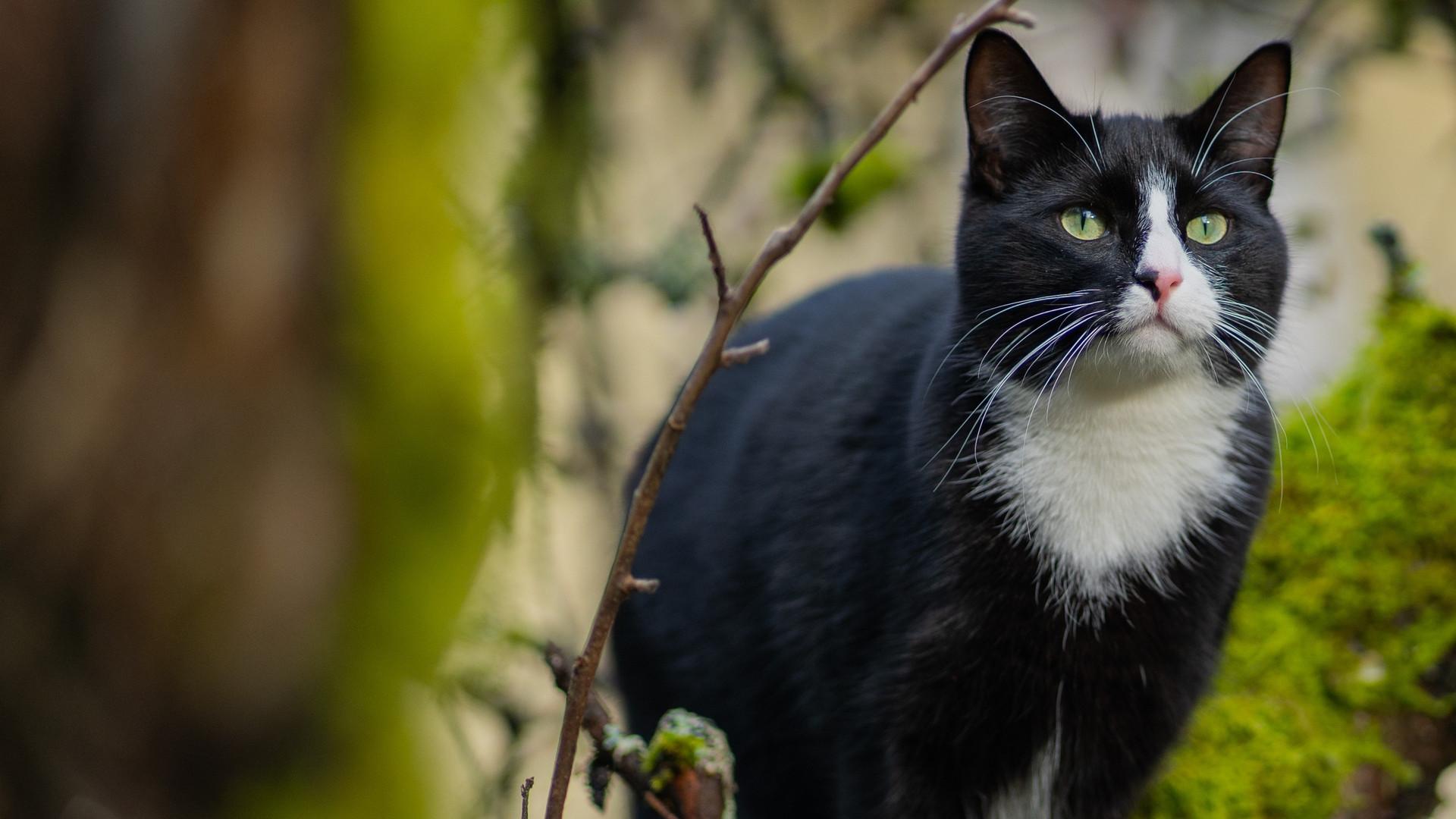 Woodgrove Animal Hospital Cat II.jpg