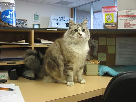 Nanaimo Cat Ragdoll Vet Clinic