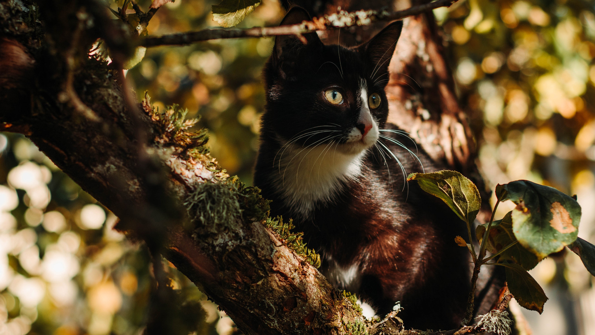 Woodgrove Animal Hospital Cat I.jpg