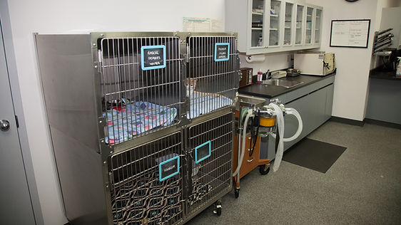 Cat and Small Dog Cages Woodgrove Animal Hospital