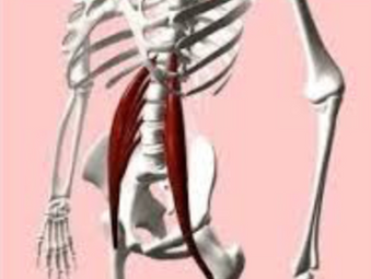 PSOAS, THE MUSCLE OF THE SOUL