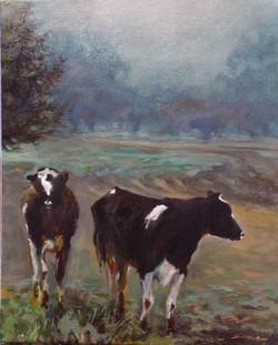 Marinwood - Cows