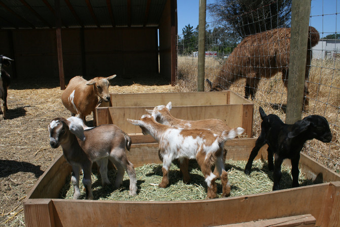 June on the Farm: What a Bunch of Babies