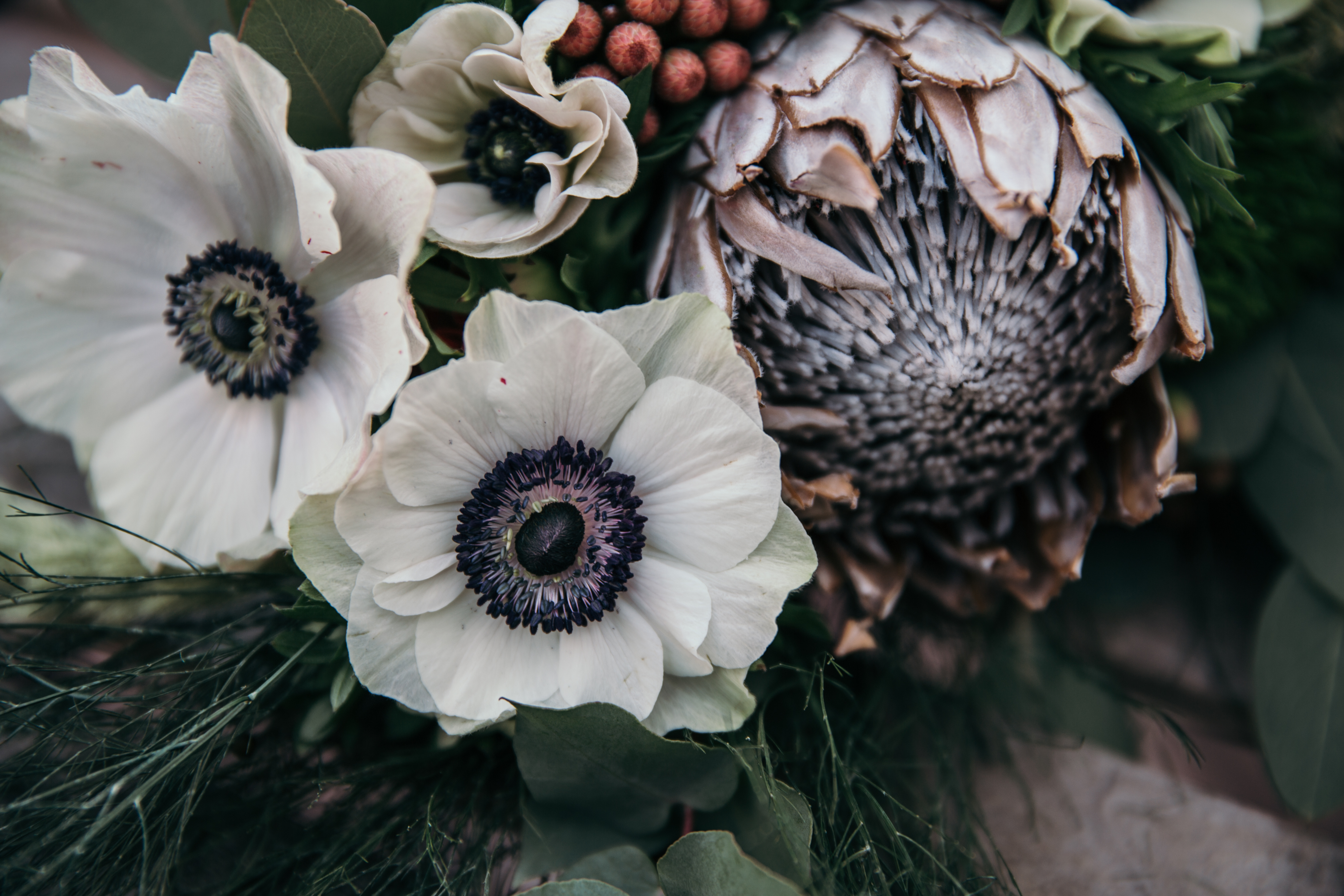 Anemone and Protea