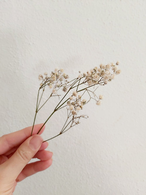 Dried Baby's Breath