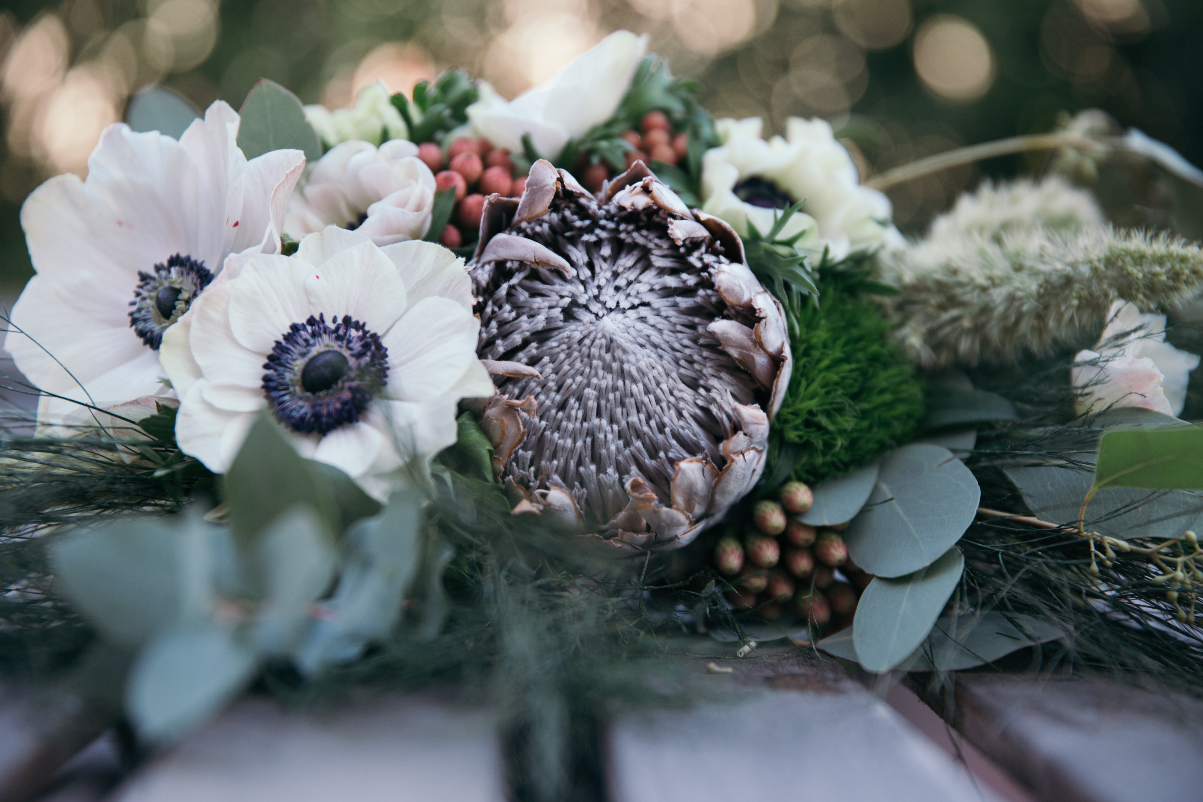 Anemone and Protea 2