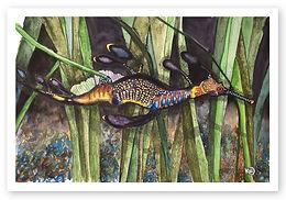 Leafy Sea Dragon 02