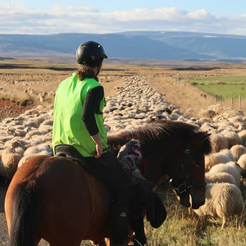 Göngur. Výprava do světa islandských kovbojů