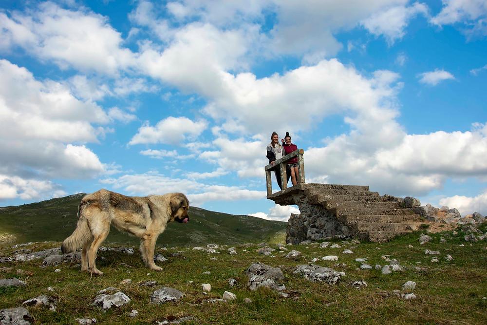 Pastevečtí psi bývají urostlí, huňatí a s převislýma ušima. Bačové bývají ušmudlaní asteničtí muži. Sterotypy... (Černá Hora)