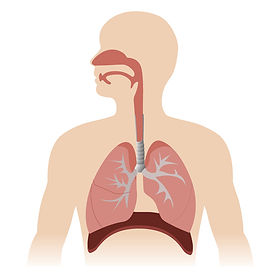 46072140-stock-vector-human-respiratory-