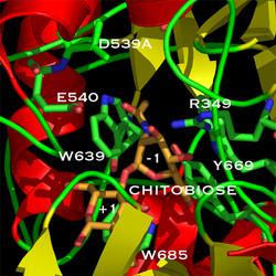 ChB-D539A:diNAg complex