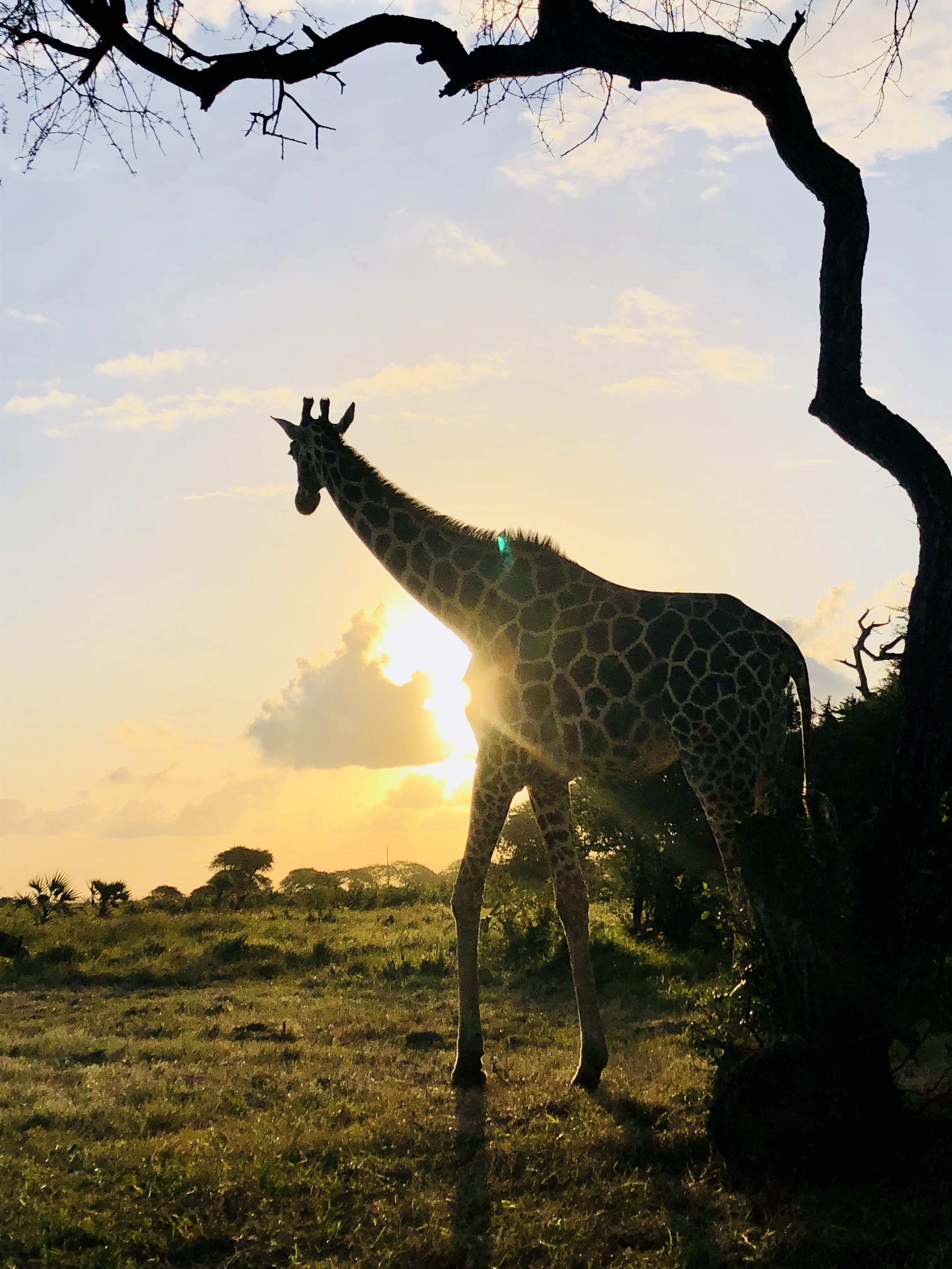 giraffe sanctuary
