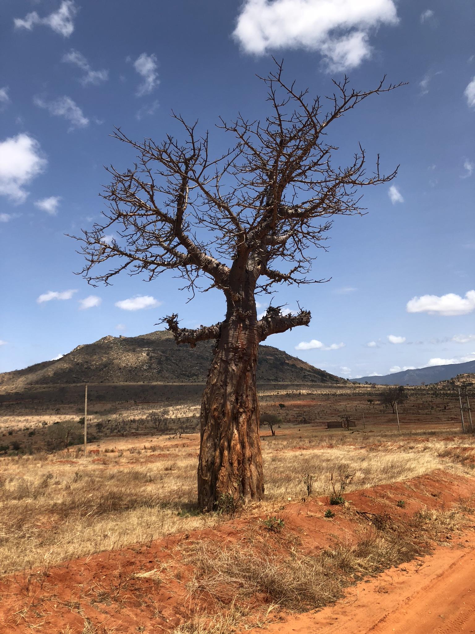 tree africa