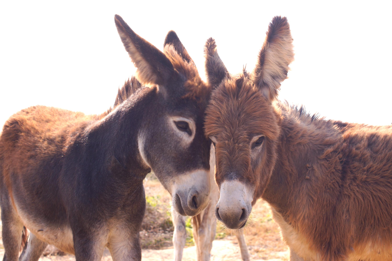 donkey aruba