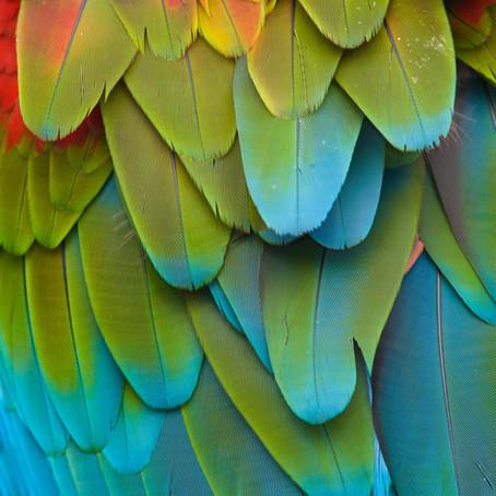 Guest Author: A Tale of Two Parrots