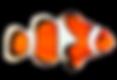 pez payaso naranja.png
