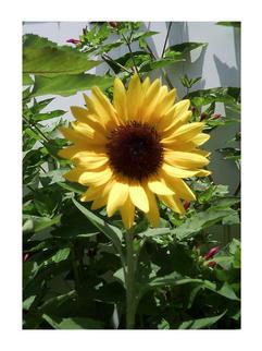 033-Jenna-Wright---Park-Western-Place-Elementary---1st-Grade---Sunny-Flower
