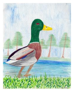 2014 Student Art #060 Lucy Anne Herlihy ret.jpg
