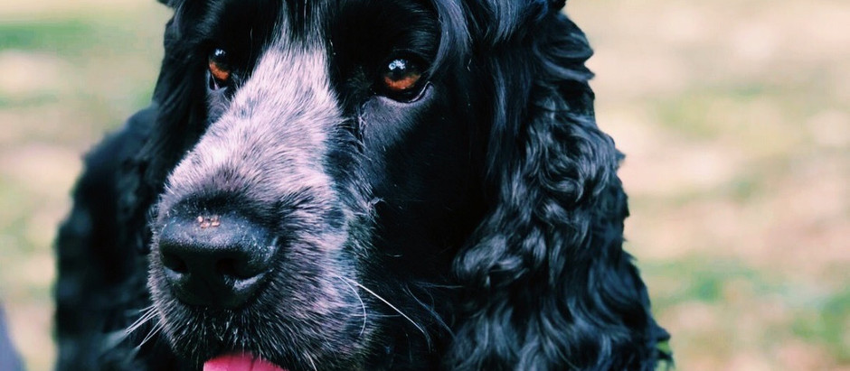 Why Dogs are Good for Our Physical and Mental Health