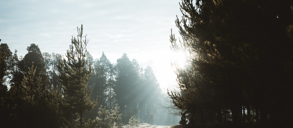 Can Homeopathy Have An Effect On Seasonal Affective Disorder (SAD)