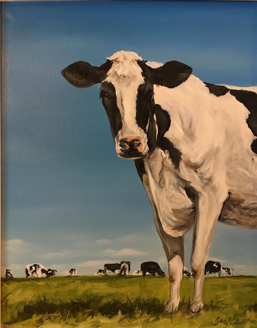 Happy Holsteins