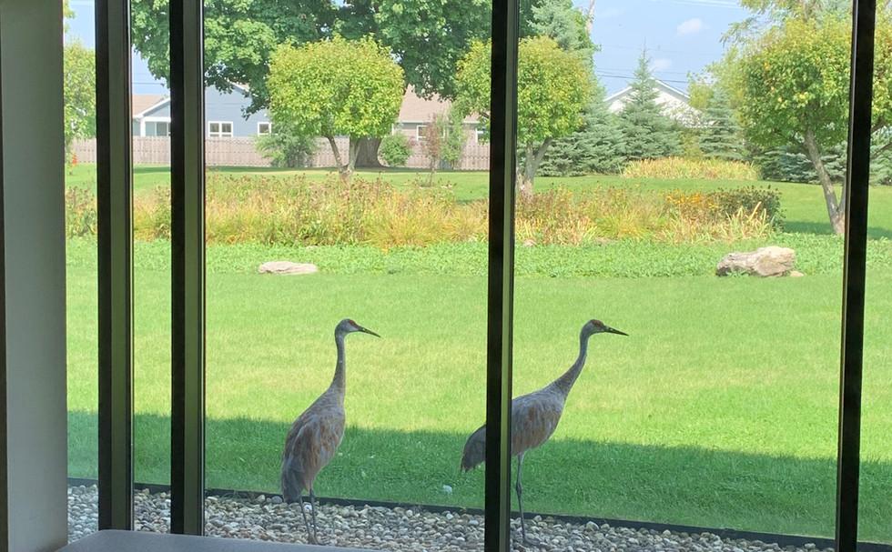 visitors ;)