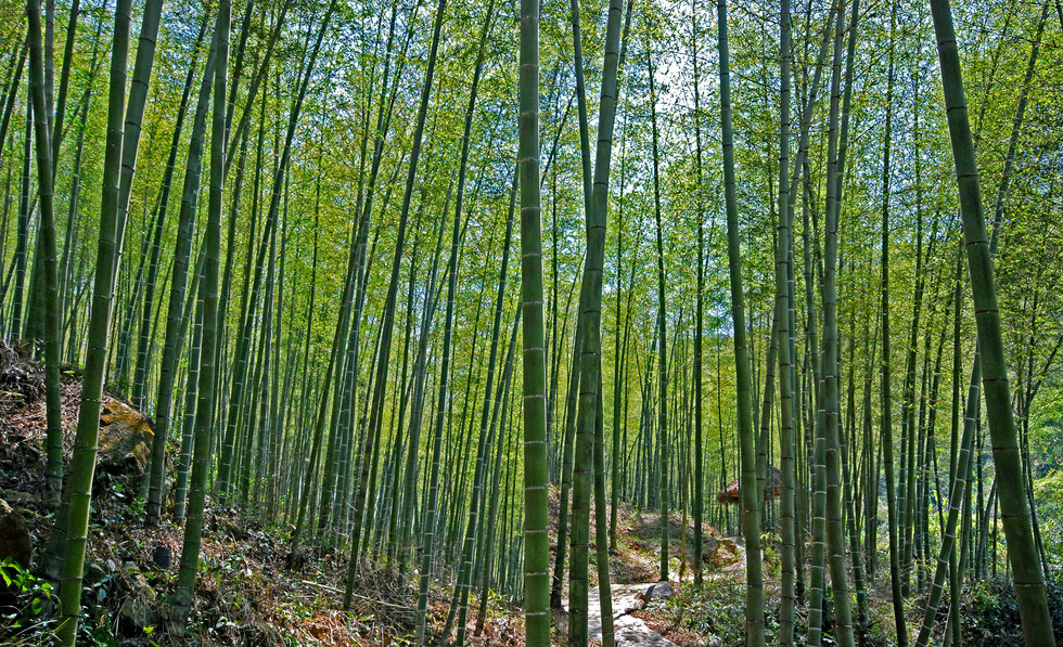 bamboo-poles-3.jpg
