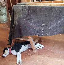 dog repairing a harp.jpg