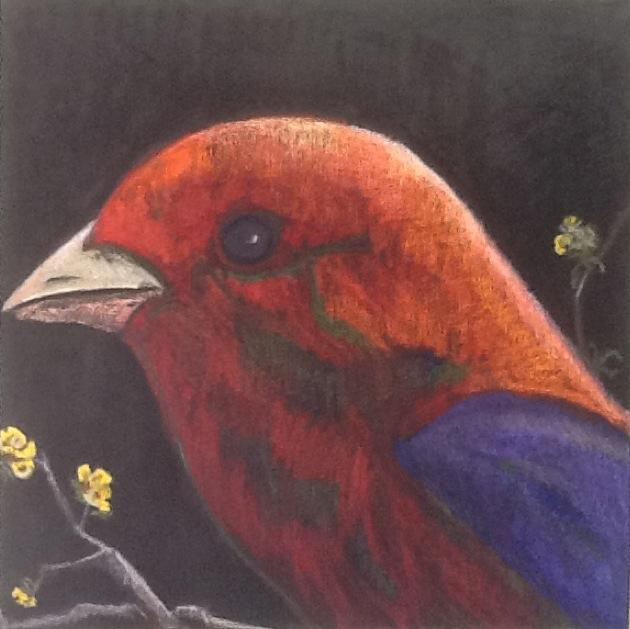 ORIGINAL BIRD SERIES