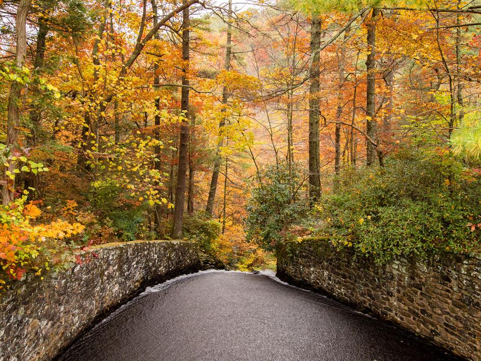 Vogel State Park | Blairsville, GA