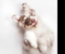 Hund_Slider.png