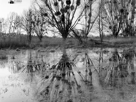 Drzewa w obiektywie
