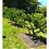 Thumbnail: Manto Anti Maleza Para Arboles Cultivos Paquete X 5 Unidades